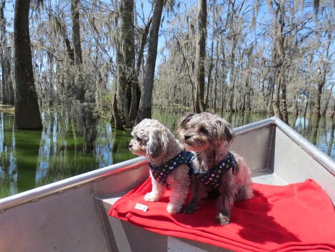 Swamp-Tour-in-Lake-Charles-Louisianna